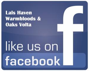 Lals Haven Warmbloods and Oaks Volta Like Facebook logo