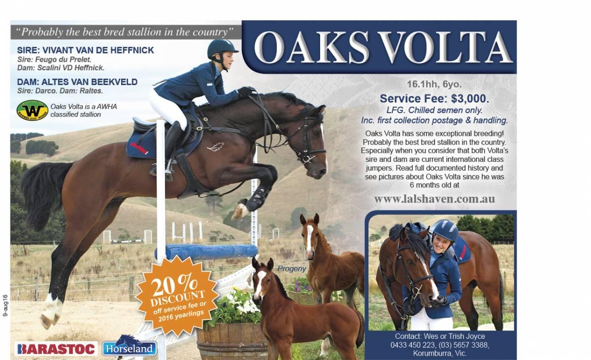 Oaks Volta advertisement 2016