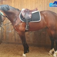 Perfectly fitted saddle blanket