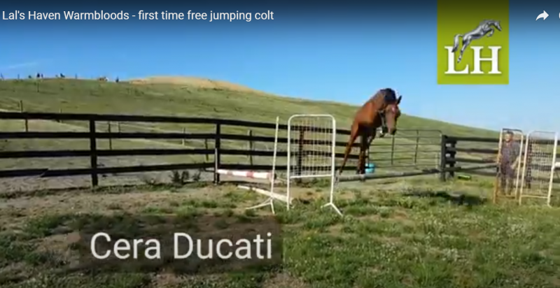First time free jumping Cera Ducati