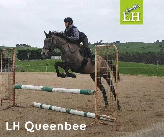 LH Queenbee